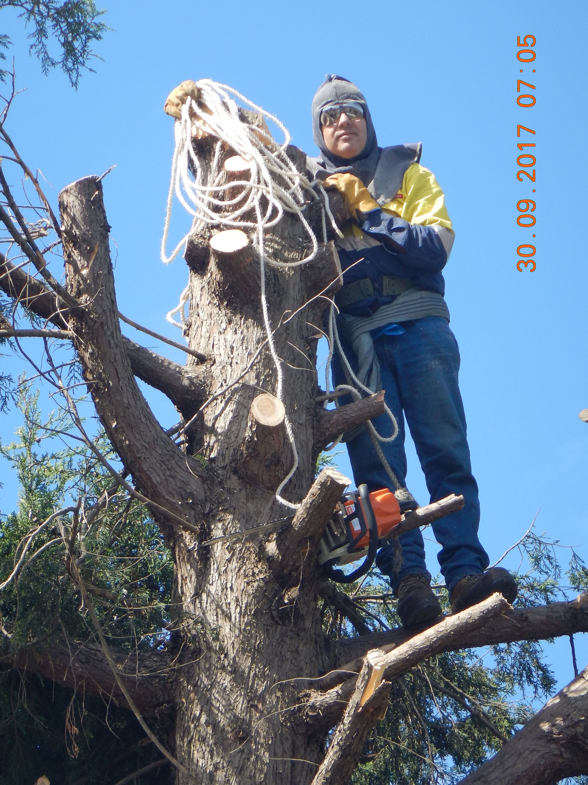 Tree Cutting  Endeavour Hills11