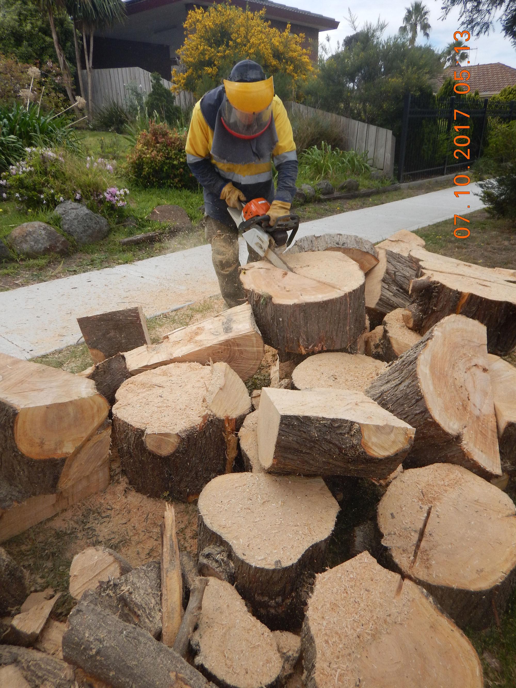 Tree Cutting 04