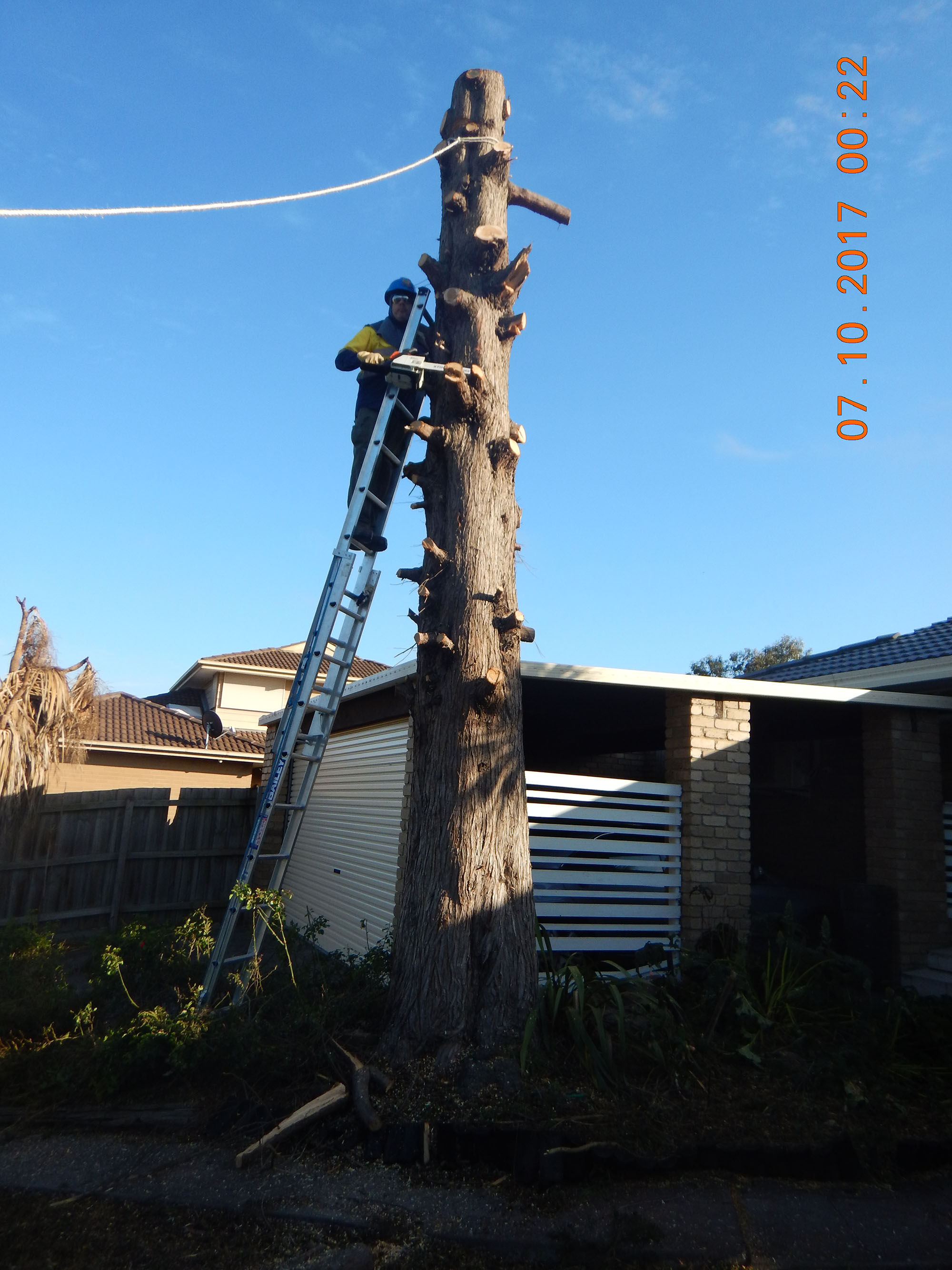 Tree Cutting 01