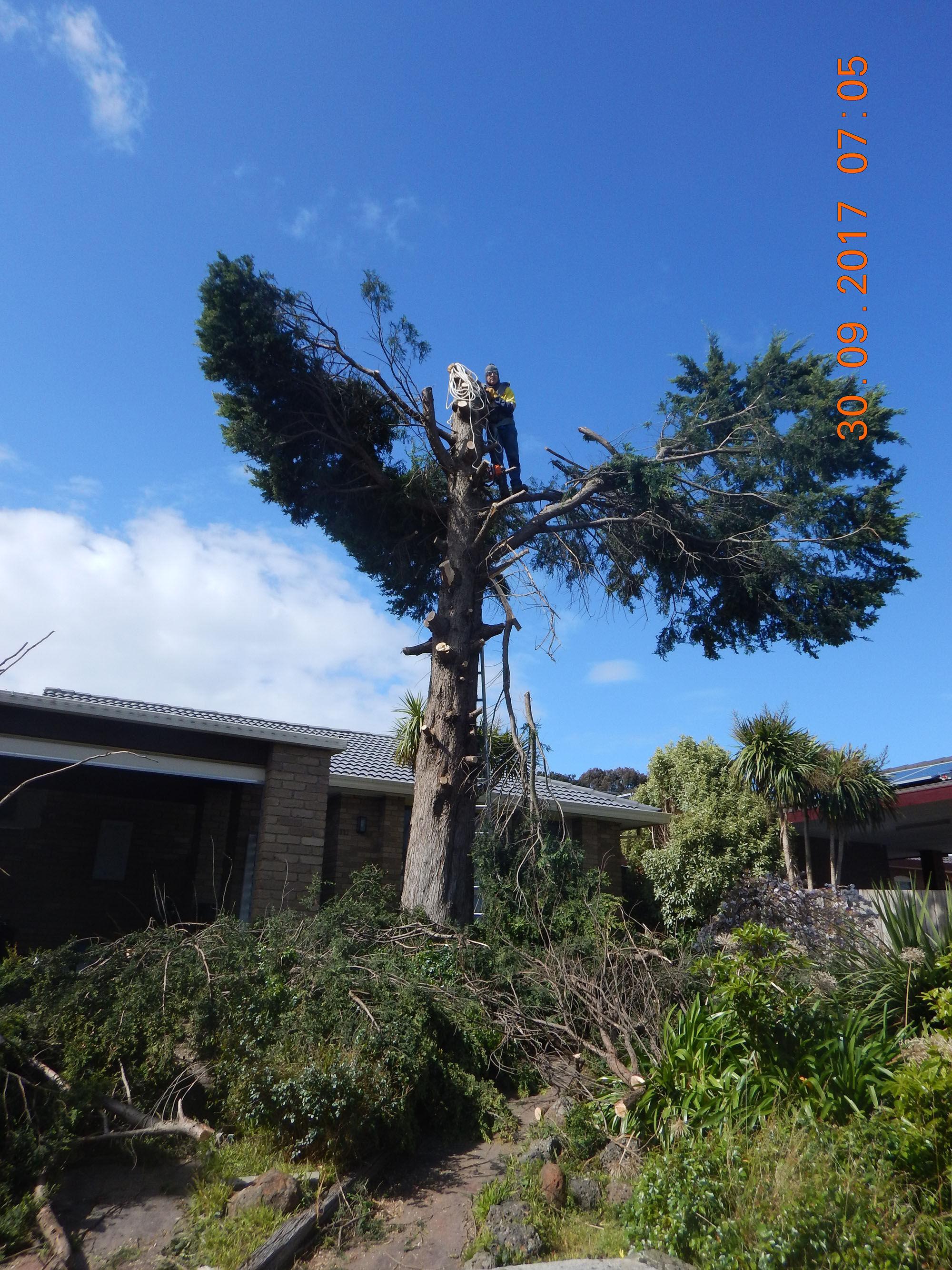 Tree Cutting 03