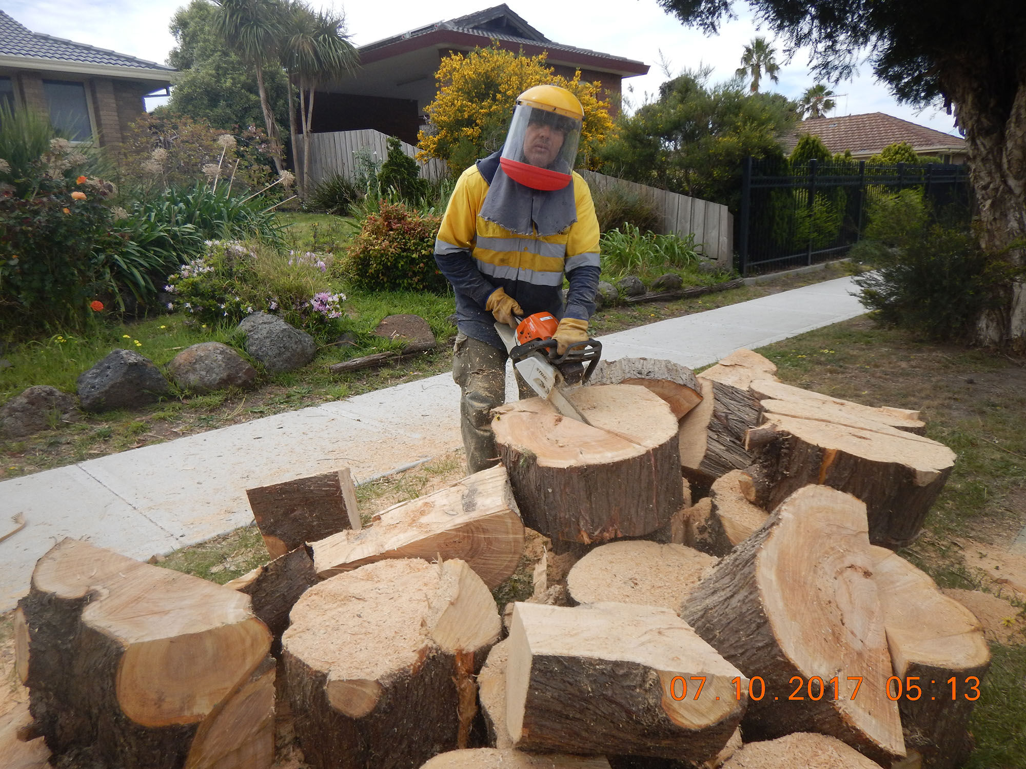 Tree Cutting 09