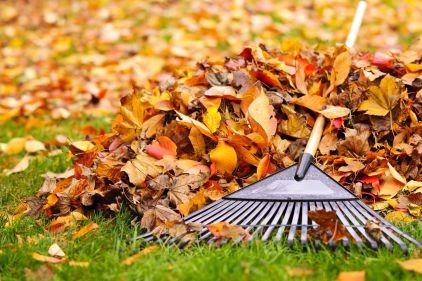 Home rubbish removal service